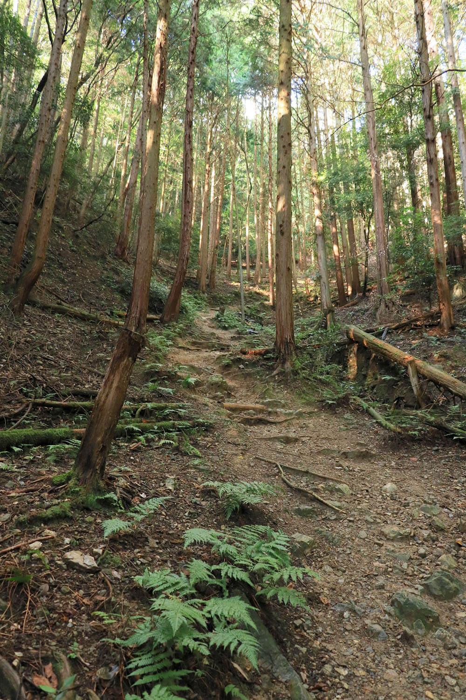 谷伝いに細い山道が伸びる。