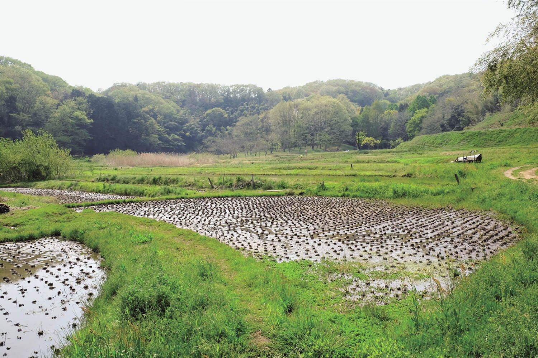 万松寺谷戸に広がる水田。谷戸には湧き水や湿地が多いので、水田が拓かれてきた。