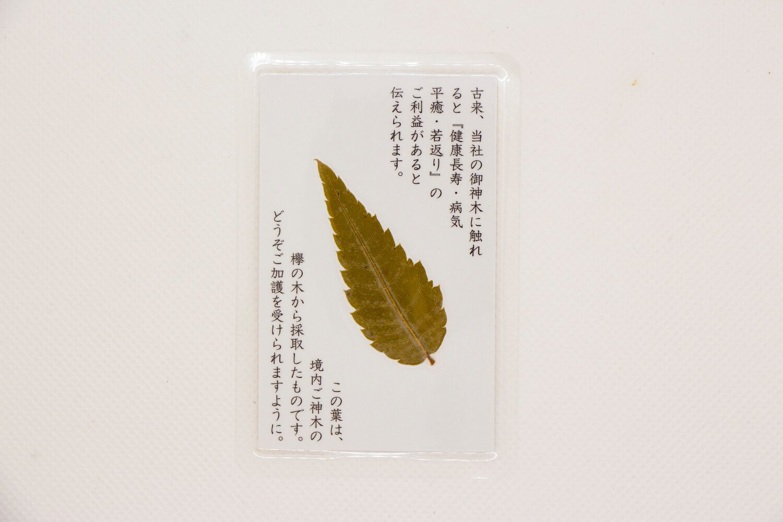 ご神木の葉入りのお守り 800円。