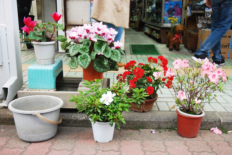 店頭を彩る色とりどりの花たち。