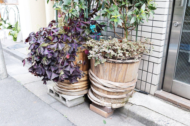 年季の入った樽からは、カタバミやヒメツルソバがもりもり溢れ出している。