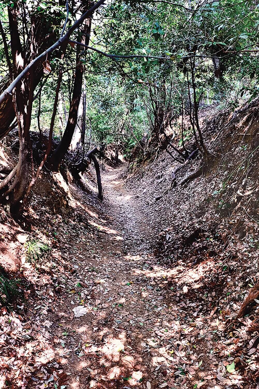 恵泉女学園大学の近くから古道へと入ると、すぐこの掘割状に造られた道がある。これは鎌倉古道跡と思えるのだが、どうだろう。もっと新しい道かもしれないが、不明。