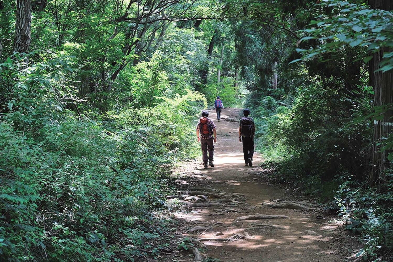 ふれあい休憩所から榎窪山へ行く途中。平らな道でのんびり歩ける。こんな登山道もいい。