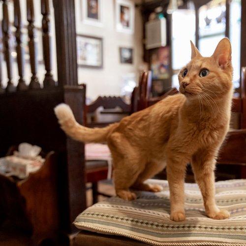 【看板猫がいるお店】谷中の喫茶店『ル・プリーべ』と3匹のネコさん