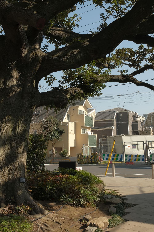 """倉庫時代はゲート脇にあった大樹はスダジイという。向こうには""""第2北王子踏切""""の跡が見える。"""