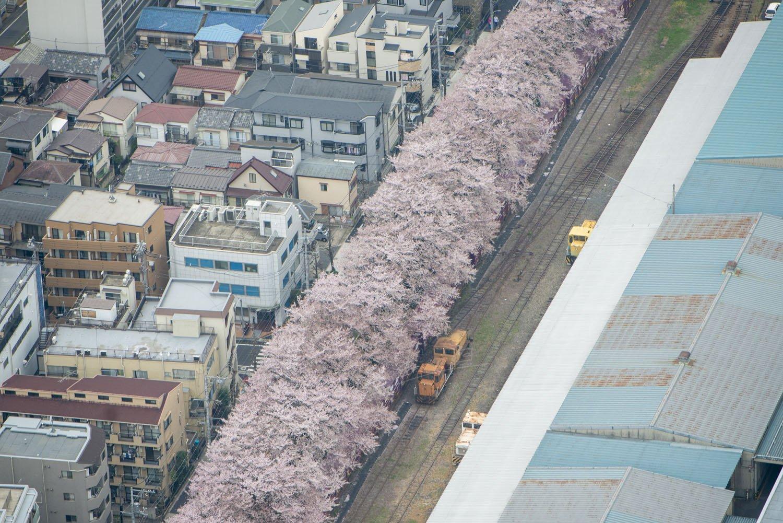 満開の桜並木と倉庫内の側線。