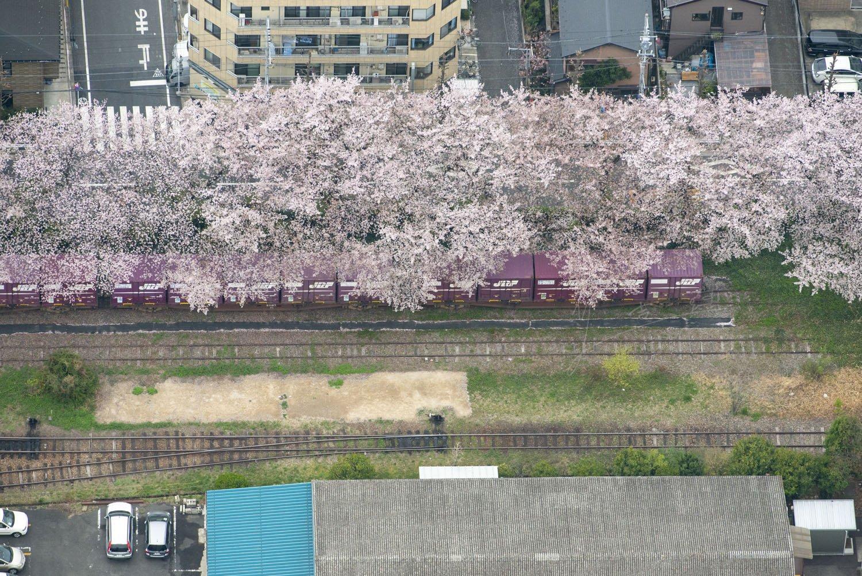 積荷が下りたコンテナ貨車が桜の下で休んでいる。