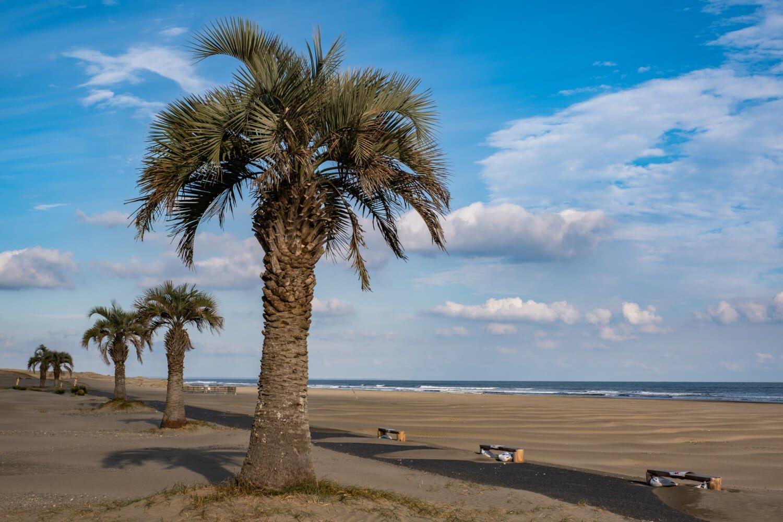 奥行き200mほどの白砂の浜には立ち並ぶヤシの木がよく似合う。
