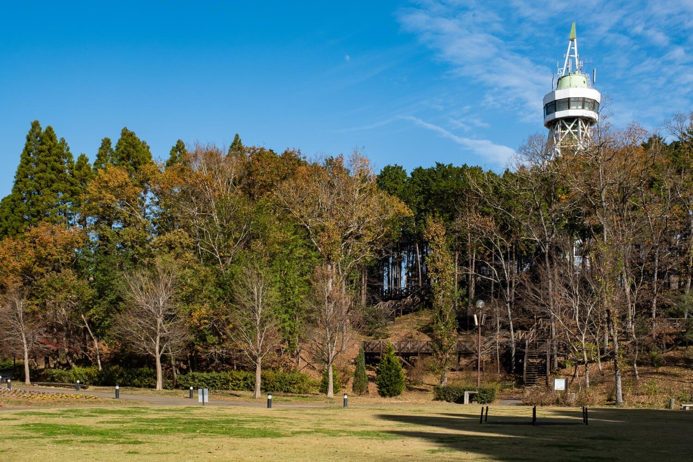 やすらぎの池近くから林越しにグリーンタワーを望む。