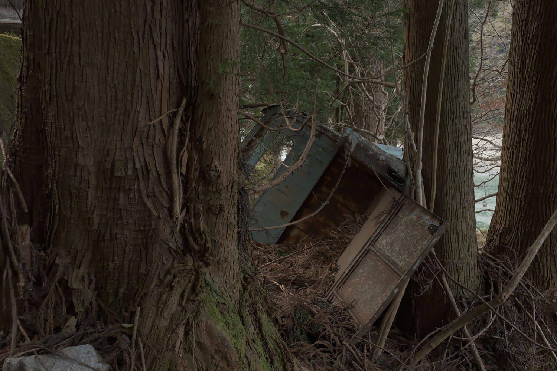背後から。成長する木々に挟まれているようだ。