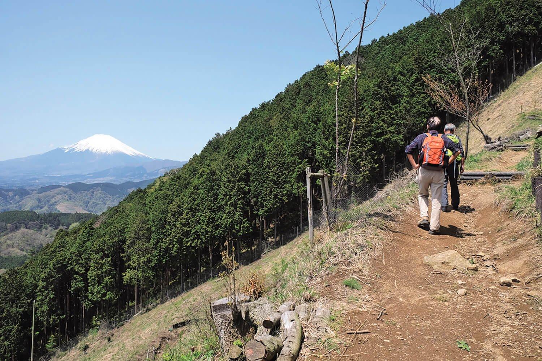 山頂にはまだ遠いが、富士山はときどき顔を出してくれる。大野山はまさに富士山を満喫できる山のひとつだ。