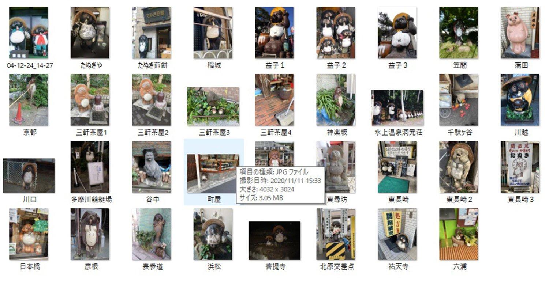 タヌキの写真コレクションの一部