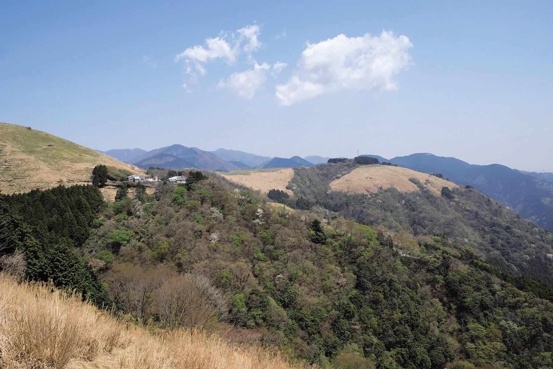 大野山山頂付近は牧場が広がる。