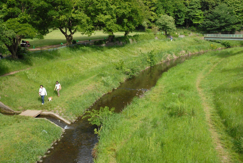 野川沿い (2)