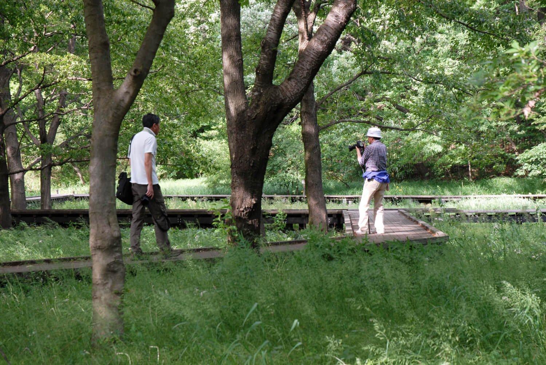 武蔵野の自然を保全する自然観察園。ほかにバーベキュー広場も人気。