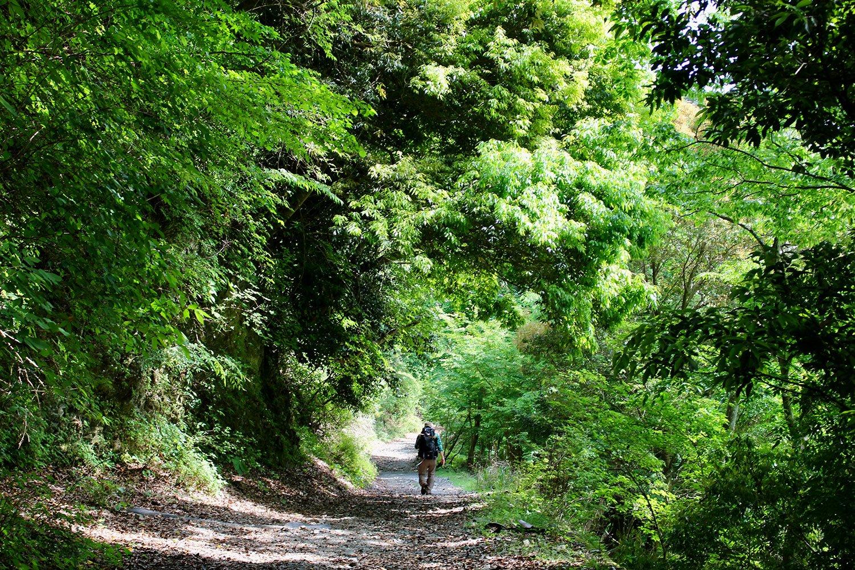 新緑が美しい『鍋割山荘』への道。丹沢の山は季節に応じてさまざまな姿を見せてくれる。