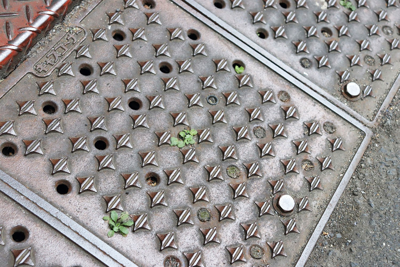 段差スロープの穴から、もぐらたたきのように顔を出す緑。おそらく穴の下に泥や水などが溜まっているのだろう。