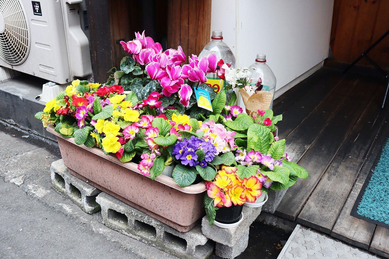 カラフル鉢。水やり用のペットボトルが「JINRO」なのが大久保スタイル。