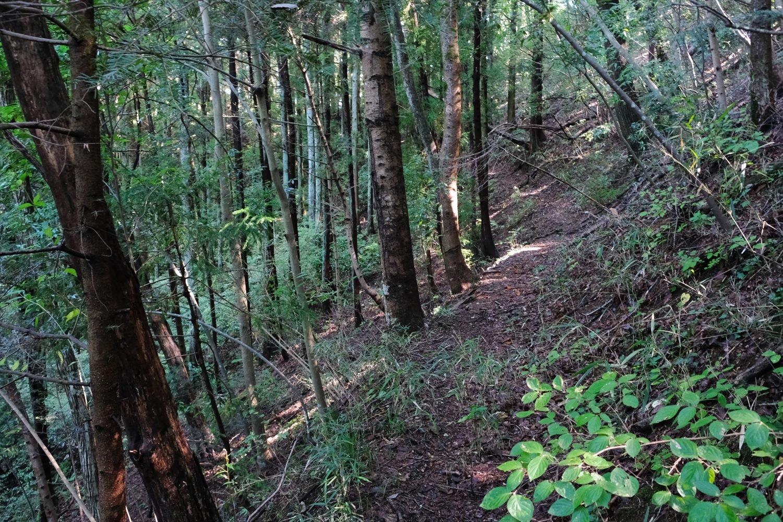 霊園の奥から登山道になる。ちょっとわかりにくいが、上がって右手のほうへ行く。