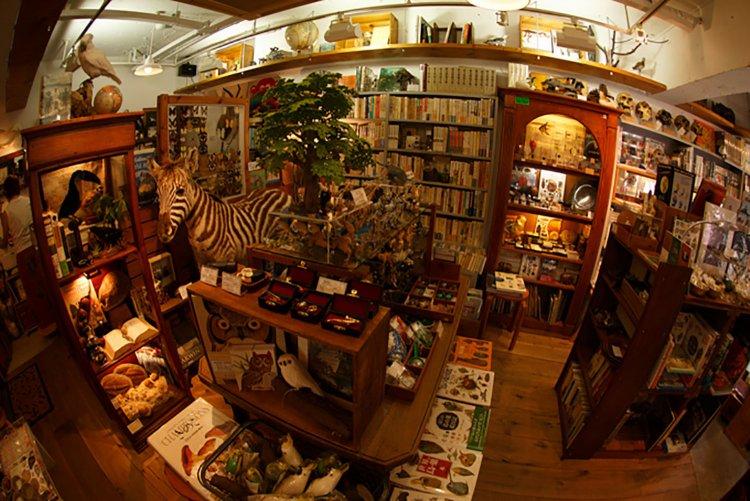 Darwin Room