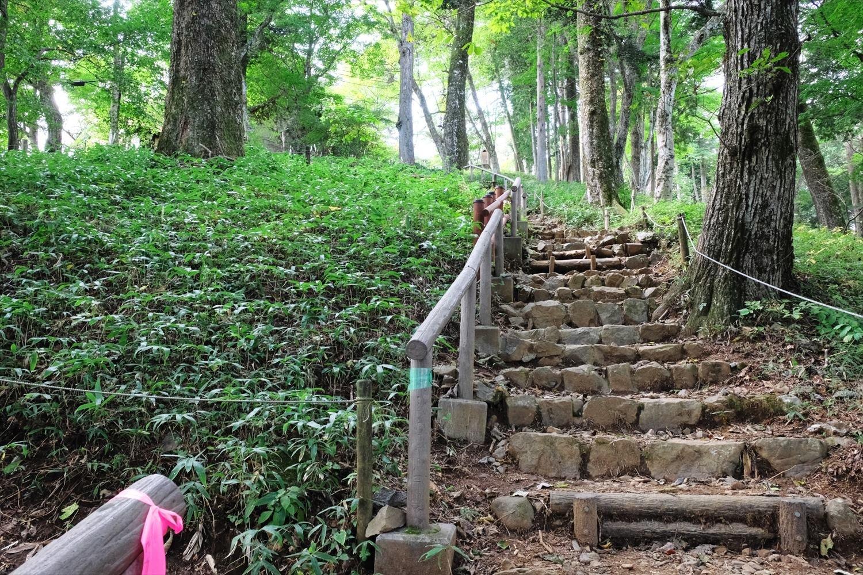 まだ葉しかないが、富士峰園地の斜面にはレンゲショウマが群生している。花期は8月中旬。