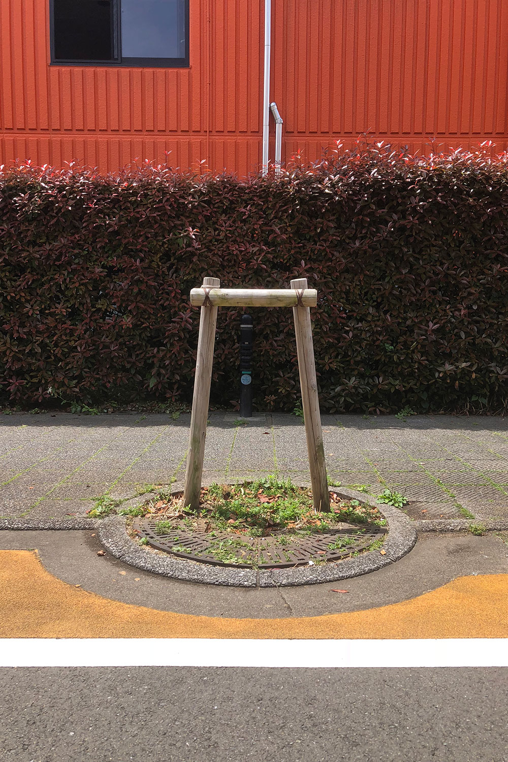 Stand-alone without a tree《純粋鳥居支柱》