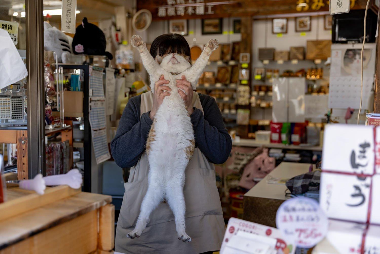 強羅のおみやげ屋さん『箱根お土産本舗こばやし』のタマさん【看板猫がいるお店】