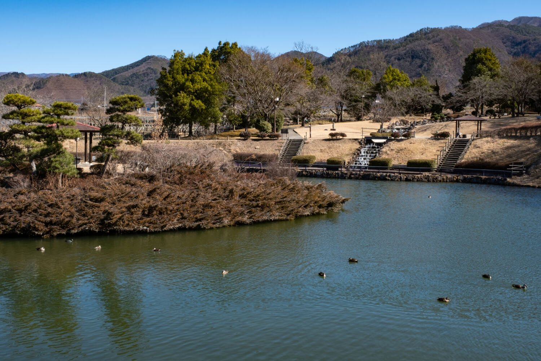 多くの水鳥が気ままにくつろぐ鏡池越しに親水広場を望む。