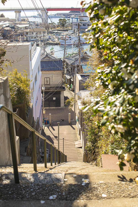三崎は高台に住宅地があり、長~い階段が多い。毎日上り下りしてたら鍛えられそう。