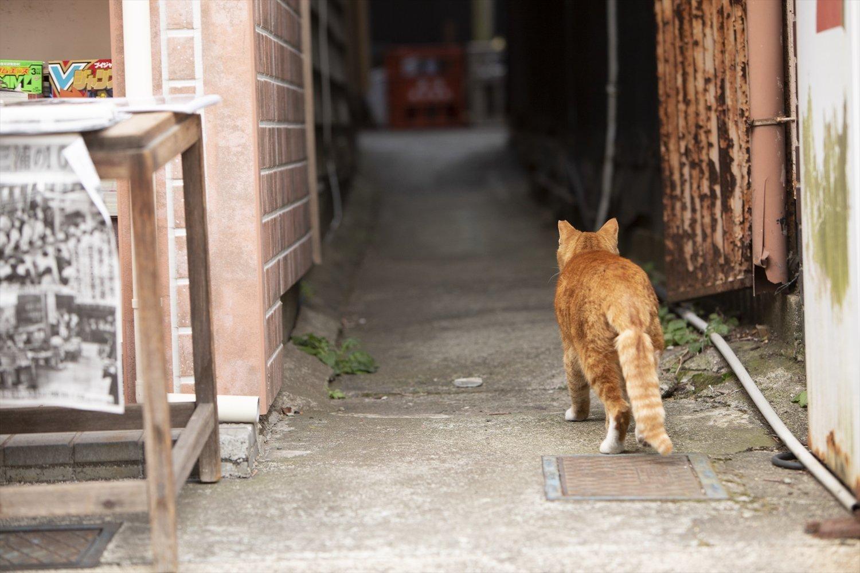 路地に入ると、猫との遭遇率が高い。