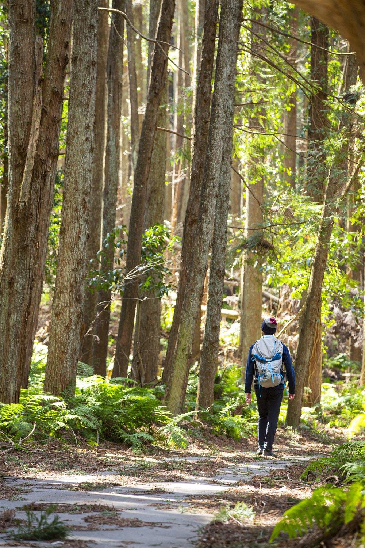 月崎トンネルを抜けると、その先には針葉樹の森が現れた。