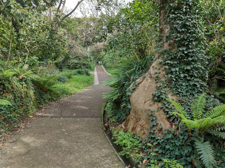 散策道は林の中へ分け入り、鳥のさえずりが心地よい。