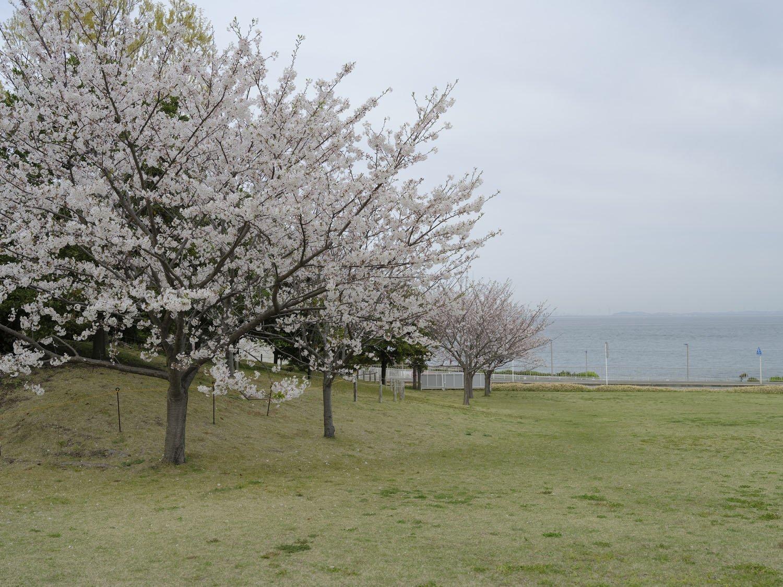 横須賀美術館からの眺め。曇天ながら東京湾と満開の桜が望めた。