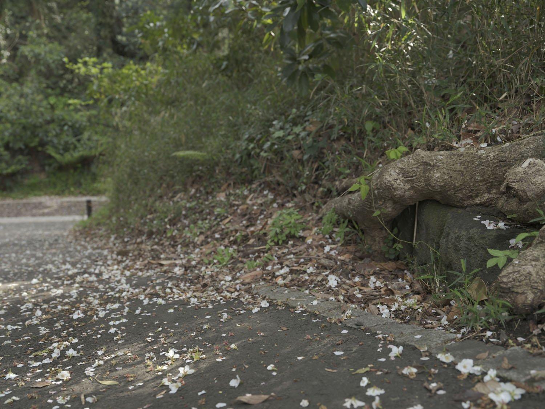 東京湾を望める「三軒家園地」脇にも砲台の一部と思しき石垣があった。