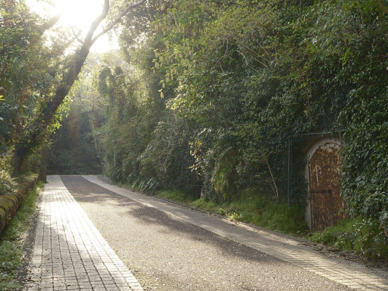 散策道を進むと掩蔽部の鉄扉がひっそりと佇んでいた。