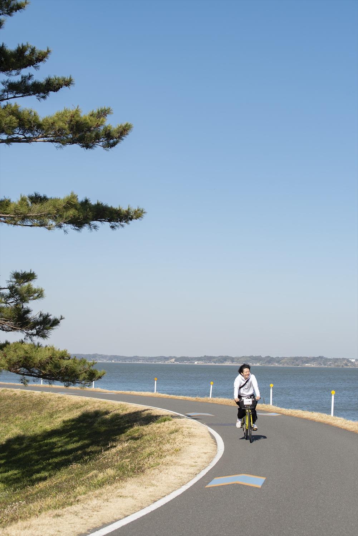 和田公園沿いのゆるいカーブ。傍らに松の木が群生している。