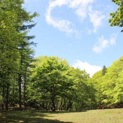 苔の絨毯を広げた天空の大広間! 飯能の秘境ウノタワへ