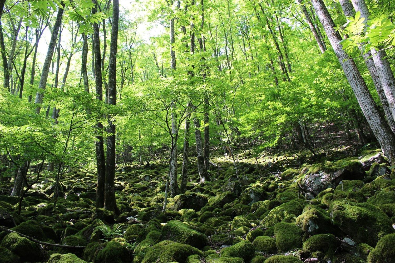 零(こぼ)れ落ちる光と影が緑の世界を一変させる。