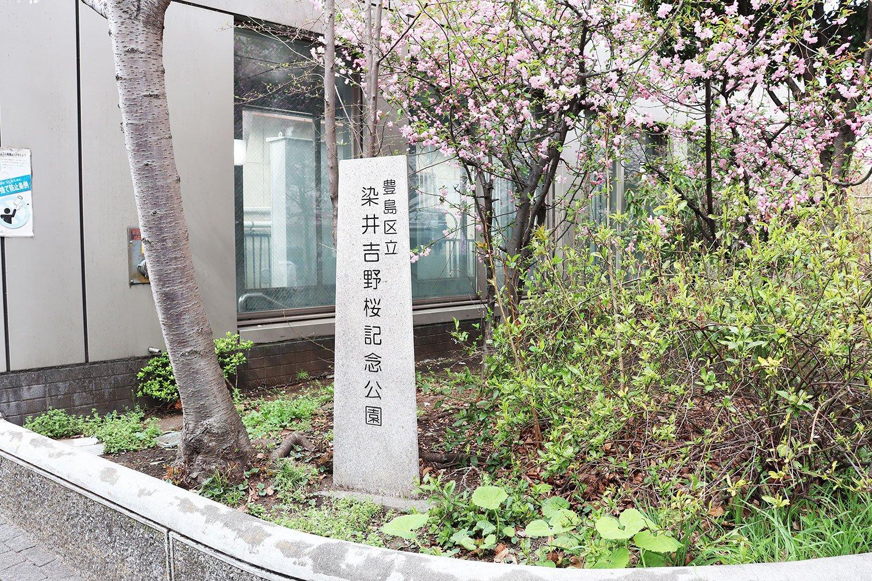 駒込駅前の染井吉野桜記念公園。