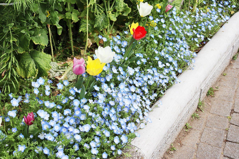公園脇の花壇にはネモフィラやチューリップなど色とりどりの春の花。