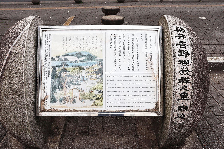 「染井吉野桜発祥之里」の記念碑。染井村で活躍した植木屋・伊藤伊兵衛の庭の様子も。