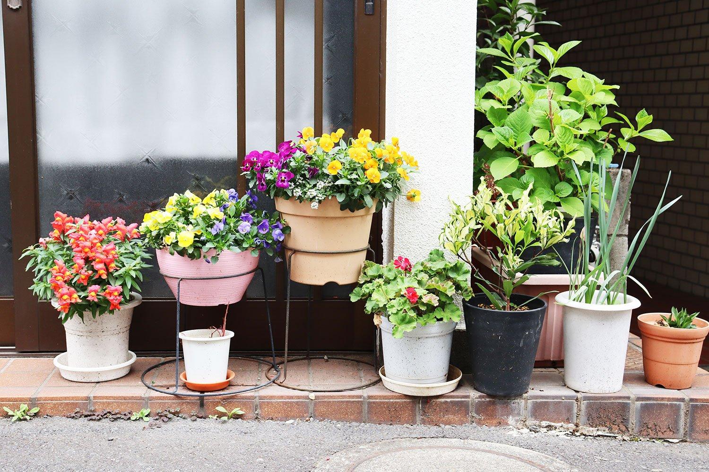 パンジーやゼラニウム。玄関先が花盛り。