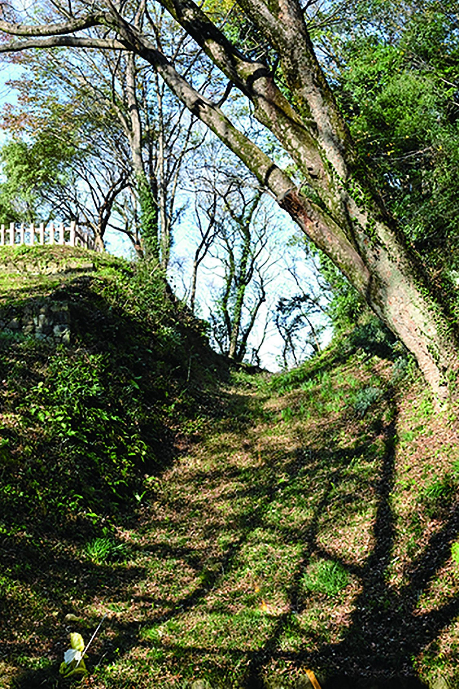 三の丸と馬場曲輪を隔てる城内最大規模の巨大な堀切。