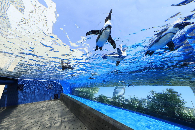 サンシャイン水族館_【差替え画像1】 2天空のペンギン (1)
