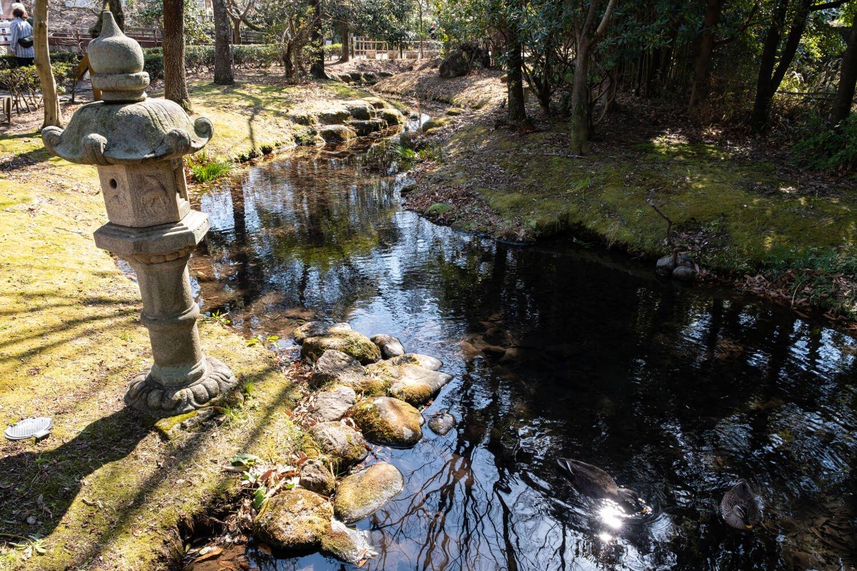 水辺に集まる野鳥を待つバードウォッチャーの姿も多い水の苑緑地。