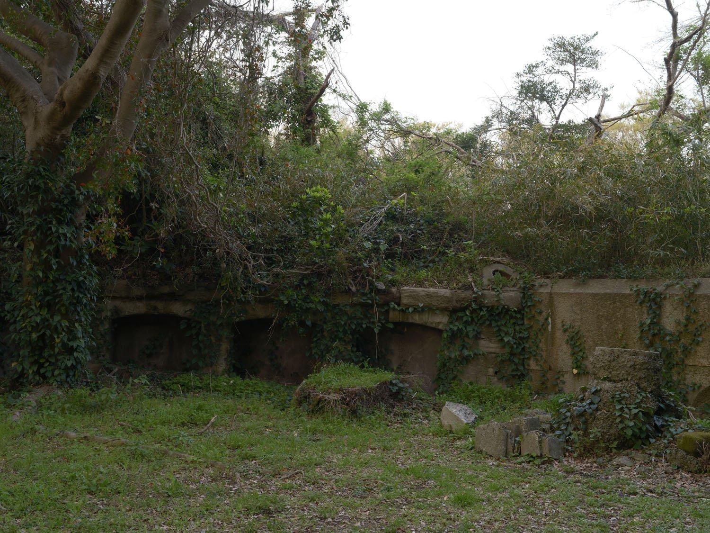 木と蔦で覆われた胸墻。残存する三基の砲座は、どれも自然へと還るかのように植物に呑まれていた。