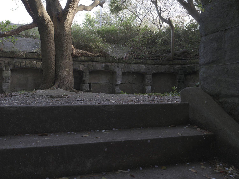 階段を上がると砲座。胸墻に太い幹がしっかりと根を張り、自然の逞しさに目を見張る。