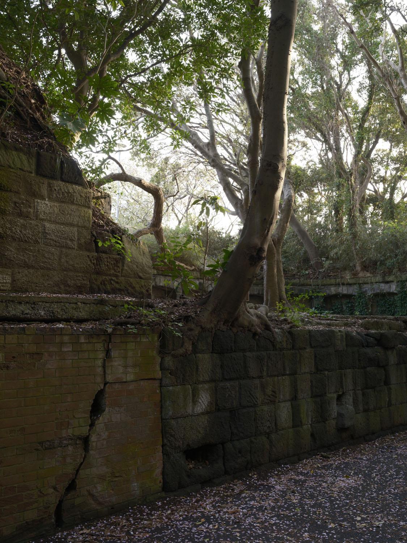 横墻部分の石垣は崩れかけ、なぜそこからという隙間から斜めに木が育っている。