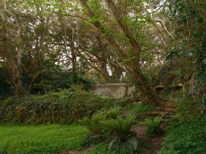 分かりづらいが一段上がったところが砲座部分。階段も植物と土に覆われていて滑りやすい。