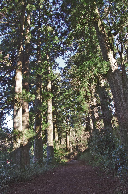 箱根旧街道沿いの杉並木。元和4年(1618)に箱根宿を設置した際に植林された。400本を越える大杉が500mにわたって並ぶ。
